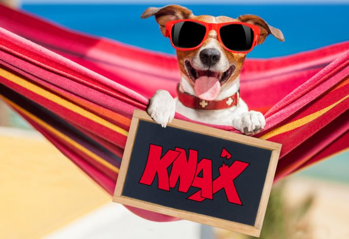 jack russell dog relaxing on a fancy red  hammock  with blank banner, placard or blackboard,  on summer vacation holidays at the beach